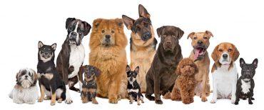 Choosing an HVAC air filter - pet fur