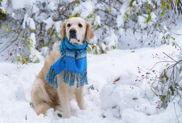 Dress your dog appropriately for winter weather in Ohio!
