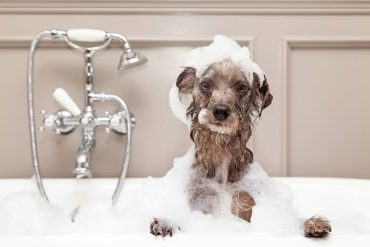 HVAC considerations for dog owners